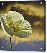 Prelude To Spring Acrylic Print