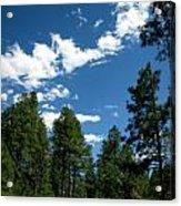 Prescott National Forest Spring Skies Acrylic Print
