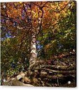Preserve Trails In Fall Six Acrylic Print