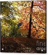 Preserve Trails In Fall Three Acrylic Print