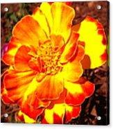 Prettiest Flower In The Garden Acrylic Print