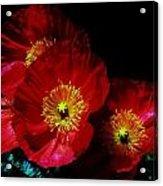 Pretty As A Poppy Acrylic Print by Helen Carson