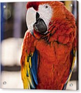 Pretty Bird 2 Acrylic Print