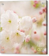 Pretty Blossom Acrylic Print