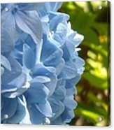 Pretty Blue Flower Acrylic Print