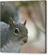 Pretty Boy Acrylic Print by Debbie Sikes