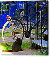 Pretty Cat In Verdun Taking The Sun Blue Picket Fence And Bike Montreal Garden Scene Carole Spandau  Acrylic Print
