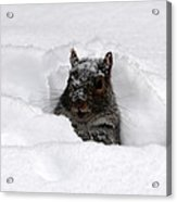 Pretty Cool Cat... Acrylic Print