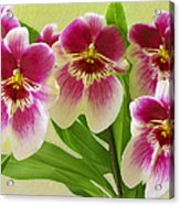Pretty Faces - Orchid Acrylic Print