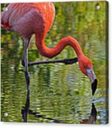 Pretty Flamingo Acrylic Print