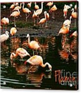 Pretty Flamingos Acrylic Print
