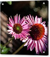 Pretty Flowers Acrylic Print by Joe Fernandez
