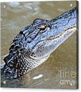Pretty Gator Acrylic Print