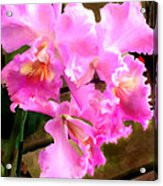 Pretty In Pink Cattleya Orchids Acrylic Print