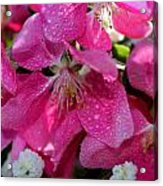 Pretty In Pink IIi Acrylic Print by Aya Murrells
