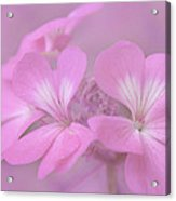 Pretty In Pink Acrylic Print by Jeff Swanson