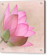 Pretty In Pink Lotus Blossom Acrylic Print by Sabrina L Ryan