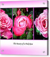 Pretty In Pink Roses Acrylic Print by Jo Collins
