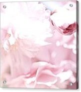 Pretty In Pink - The Sweet One Acrylic Print