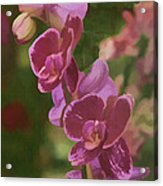 Pretty In Pink Water Color Effect Acrylic Print