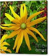 Pretty In Yellow Acrylic Print