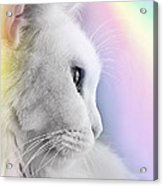 Pretty Kitty Acrylic Print