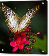 Pretty Little Butterfly  Acrylic Print