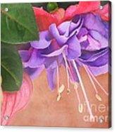 Pretty Little Fuchsia Acrylic Print