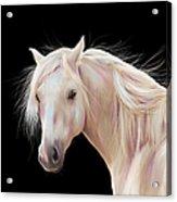 Pretty Palomino Pony Painting Acrylic Print