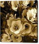 Pretty Petals 2 Acrylic Print