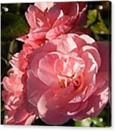 Pretty Pink Bunch Of Roses Acrylic Print