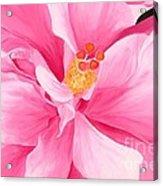 Dancing Hibiscus Painting Acrylic Print
