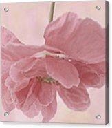 Pretty Pink Poppy Macro Acrylic Print