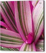 Pretty Plant Leaves 2 Acrylic Print