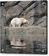 Pretty Poor Substitute Acrylic Print