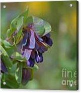 Pretty Purple Flowers In Ireland Acrylic Print