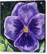 Pretty Purple Pansy Person Acrylic Print
