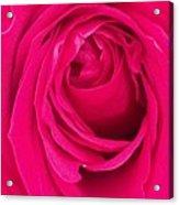 Pretty Red Rose  Acrylic Print