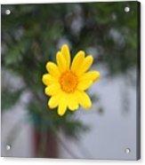 Pretty Yellow Flower Acrylic Print