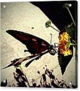 Prey The Yellow Flower Acrylic Print