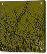 Prickly Branches Acrylic Print