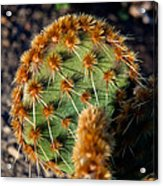Prickly Cactus Leaf Green Brown Plant Fine Art Photography Print  Acrylic Print