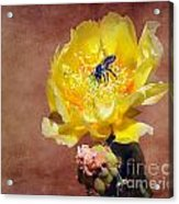 Prickly Pear And Bee Acrylic Print