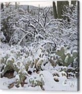 Prickly Pear And Saguaro Cacti Acrylic Print