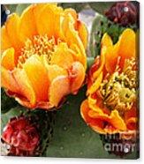 Prickly Pear Blossom Orange Acrylic Print