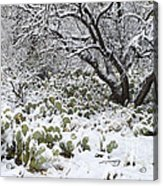 Prickly Pear Cactus And Mesquite Tree Acrylic Print