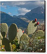 Prickly Pear Cactus And Mountains Acrylic Print
