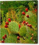 Prickly Pear Cactus Acrylic Print