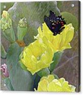 Prickly Pear Flower Acrylic Print