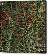 Prickly Pete Cactus Acrylic Print
